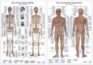 Anatomie-Poster im Doppelpack